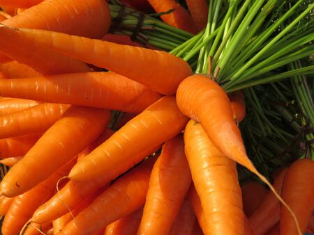 luscious: Background of fresh and luscious raw carrots fresh from a farm.