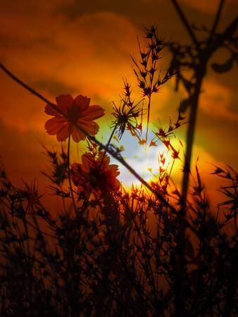 adverso: Dos flores en entre arbustos espinosos mirando al sol poniente que representa la esperanza y ser �nico en la naturaleza adversa.