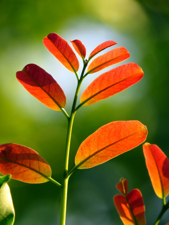offshoot: A unique photo of bright colored tender leaves of a tree growing towards light Stock Photo