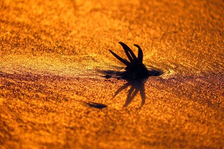 wierd: A weird shaped marine flower on the golden sands of a beach.