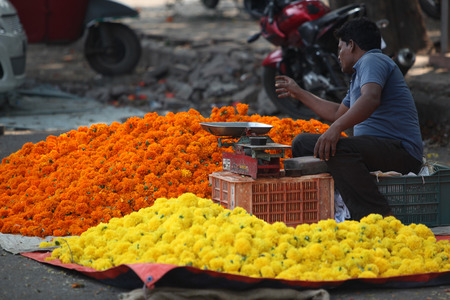 pune: Pune, India - October 21, 2015: A man setting up his marigold flower shop on the streetside in India, on the eve of Dassera festival
