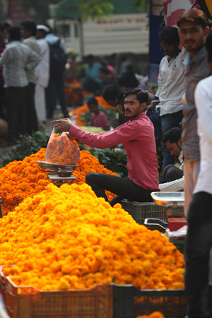 pune: Pune, India - October 21, 2015: A seller weighing a bag of marigold flowers before selling it in his streetside shop, on the eve of Dassera festival in India Editorial