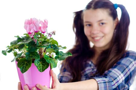 Girl holding a pot of Persian cyclamen flowers (cyclamen persicum) against a white background Stock Photo