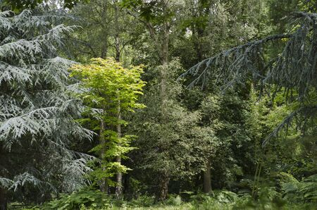 Mixed forest in an English park.