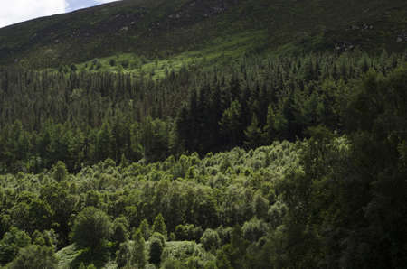 Hillside with heathland and mixed woodland in summer.