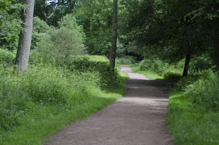 A wide path leading through mature English woodland