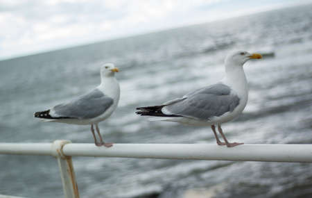 Two seagulls at seaside standing on promenade railings with stormy ocean background Stock Photo