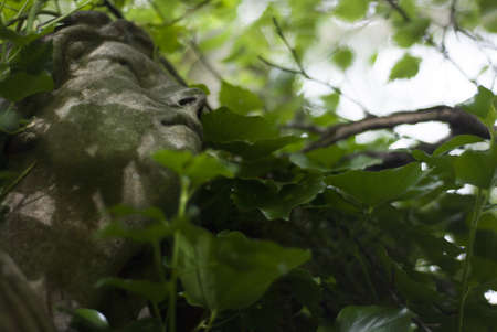 woodland sculpture: Closeup of a stone carving of an  angels face with a serene, reflective expression looking upward through overgrown Ivy and Tree canopy  Stock Photo