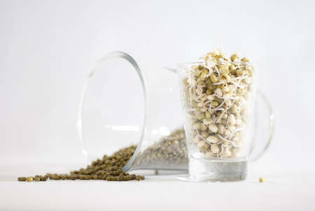 Mung bean sprouts and dry mung beans ready for sprouting in glass jars on a white background