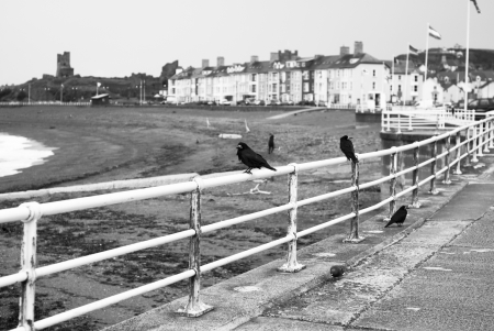 Ravens and Crows sitting on railings on a seaside promenade on a cloudy day in black and white  photo
