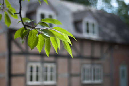 A tudor country house seen through a hanging branchlet of cherry leaves in the front left forground  Stock Photo - 14631891