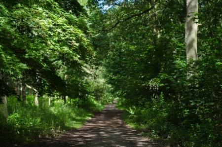 A wide path leading through mature English woodland  photo