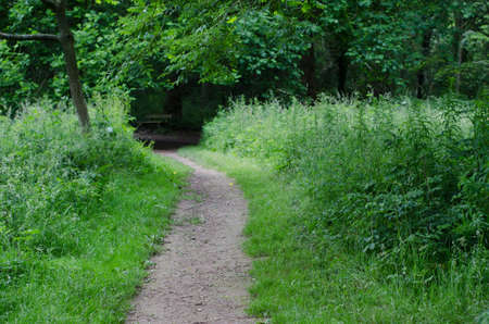 Narrow pathway to an empty wooden bench in the background with mixed forest