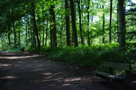 An empty wooden bench with mixed forest in the background