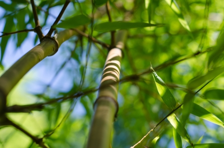 Bamboo trunk and soft focus leaves with blue sky in background  Stock Photo