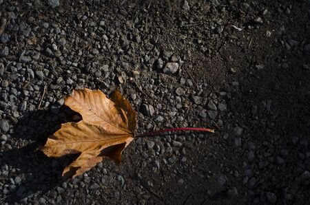 A single, fallen, bright orange sycamore leaf of Autumn fall, on a grey road photo