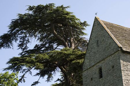 14th century: 14th Century Church Tower of stone construction, with saddleback, slate tiled roof, next to an enourmous pine tree towering over it. Stock Photo