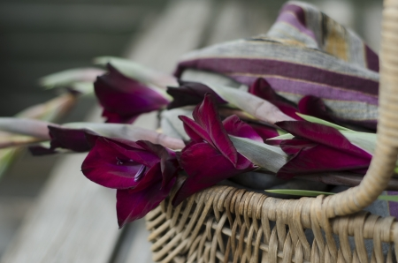 iridaceae: Plum coloured Gladioli in shabby chic basket with cotton summer scarf of coordinate colors