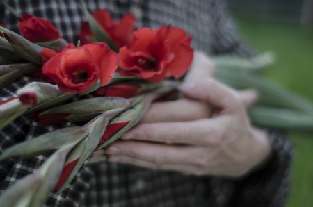 iridaceae: Middle aged woman in checked shirt, holding scarlet red gladioli flowers in arms, outdoors Stock Photo