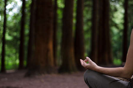outdoorsman: Woman sitting in lotus position, meditation in a Pine Forest