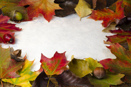 A frame of colourful autum leaves, nuts and berries around white textured paper, with cop space