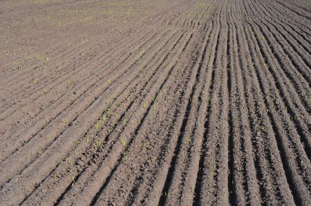 Plowed Field Photo. Planting a wheat  field in the spring. Plowed Field.