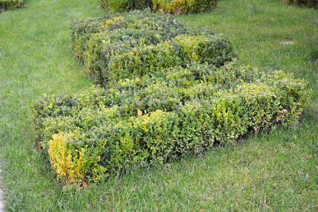 Buxus With Copy Space. Front Yard Landscape Design with Boxwood Hedges. Boxwood Hedge.