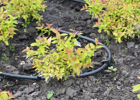 点滴灌漑システムをクローズアップ。マイクロ灌漑は、点滴灌漑または少量灌漑とも呼ばれ、植物の根ゾーンに直接水を提供します。