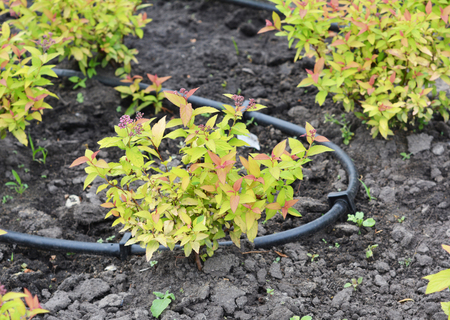 Close up on drip irrigation systems. Micro irrigation, also called drip irrigation or low-volume irrigation, delivers water directly to the root zone of the plant.