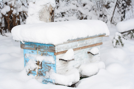 Honey Bees In The Winter. Wintering Bees in Beehive. In beekeeping, a winter cluster is a well-defined cluster of honey bees 스톡 콘텐츠