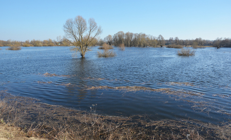 Desna rive flood in spring