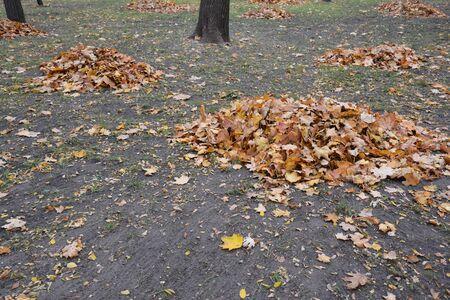 Cleaning fallen leaves in the garden Stok Fotoğraf
