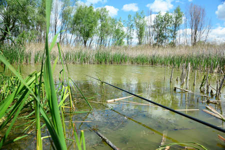 Relaxing and fishing with a fishing rod on a calm pond richly covered with bulrush, reedmace and common reed.