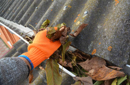 A man in gloves is cleaning a blocked rain gutter attached to the asbestos roof by removing fallen leaves, debris, dirt and moss to avoid roof gutter problems and water damage. Zdjęcie Seryjne