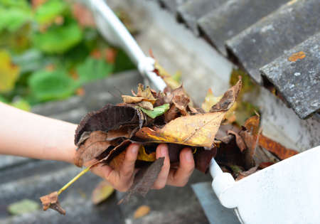 A close-up on cleaning the clogged roof gutters by hand from dry fallen leaves in autumn. Zdjęcie Seryjne