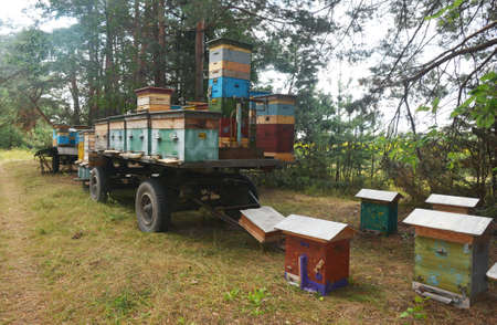 Many beehives were transported by a tractor trailer to a new location in a forest to collect nectar and pollen for efficient linden honey harvest in summer as a part of a beekeeping or apiculture.