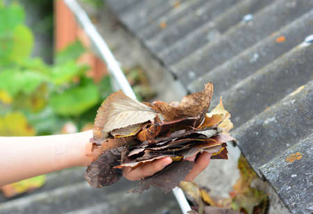 A homeowner is cleaning out roof gutters by taking away debris, fallen dry leaves by hand to keep the rain gutter unclogged and free to rain water in autumn.