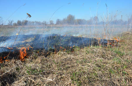 Dry grass on fire in spring. Burning dry grass in spring is quickly getting out of control. Stock Photo
