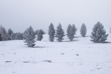 Winter scene of trees in fog photo