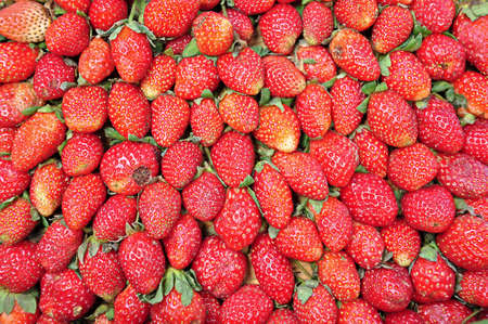 fresh strawberry Stock Photo - 13782846