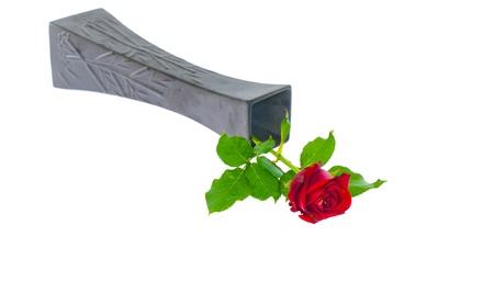 single red rose in black vase on white background Stock Photo - 14428866