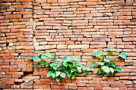 tile able: Old brick wall as background