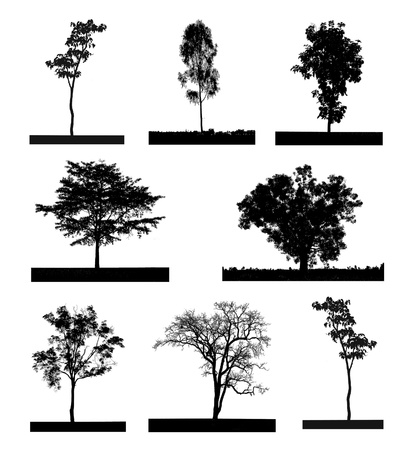 black silhouette of a tree set, on a white background Stock Photo - 15606340