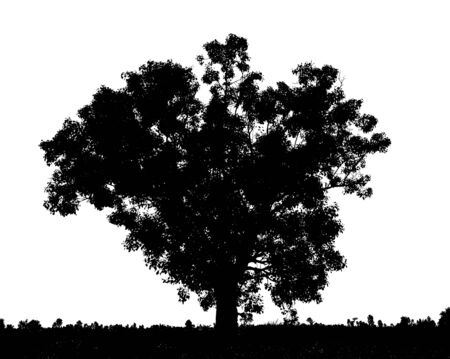 black silhouette of a tree set, on a white background photo