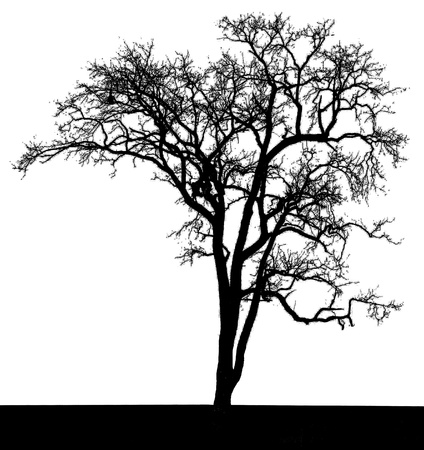 black silhouette of a tree set, on a white background
