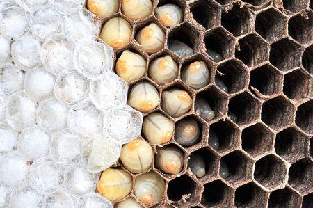 eliminating: Wasps nest