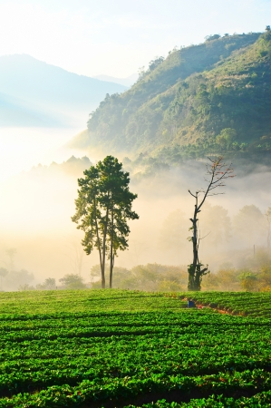 morning fog in doi angkhang mountain  Chiang Mai, Thailand  photo