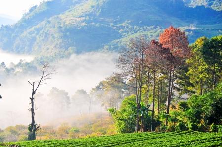 strawberry plantation at doi angkhang mountain, chiangmai   thailand