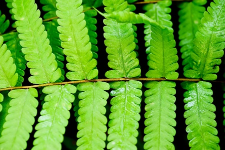 fresh green fern leave photo