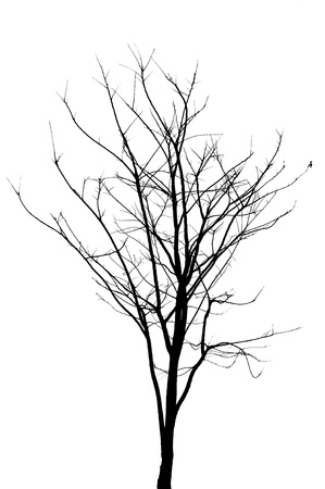 Silhouette of dead tree without leaves Stock Photo